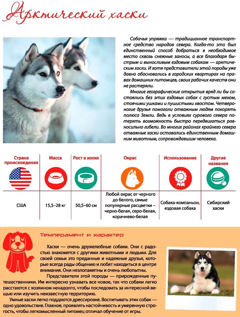 husky project
