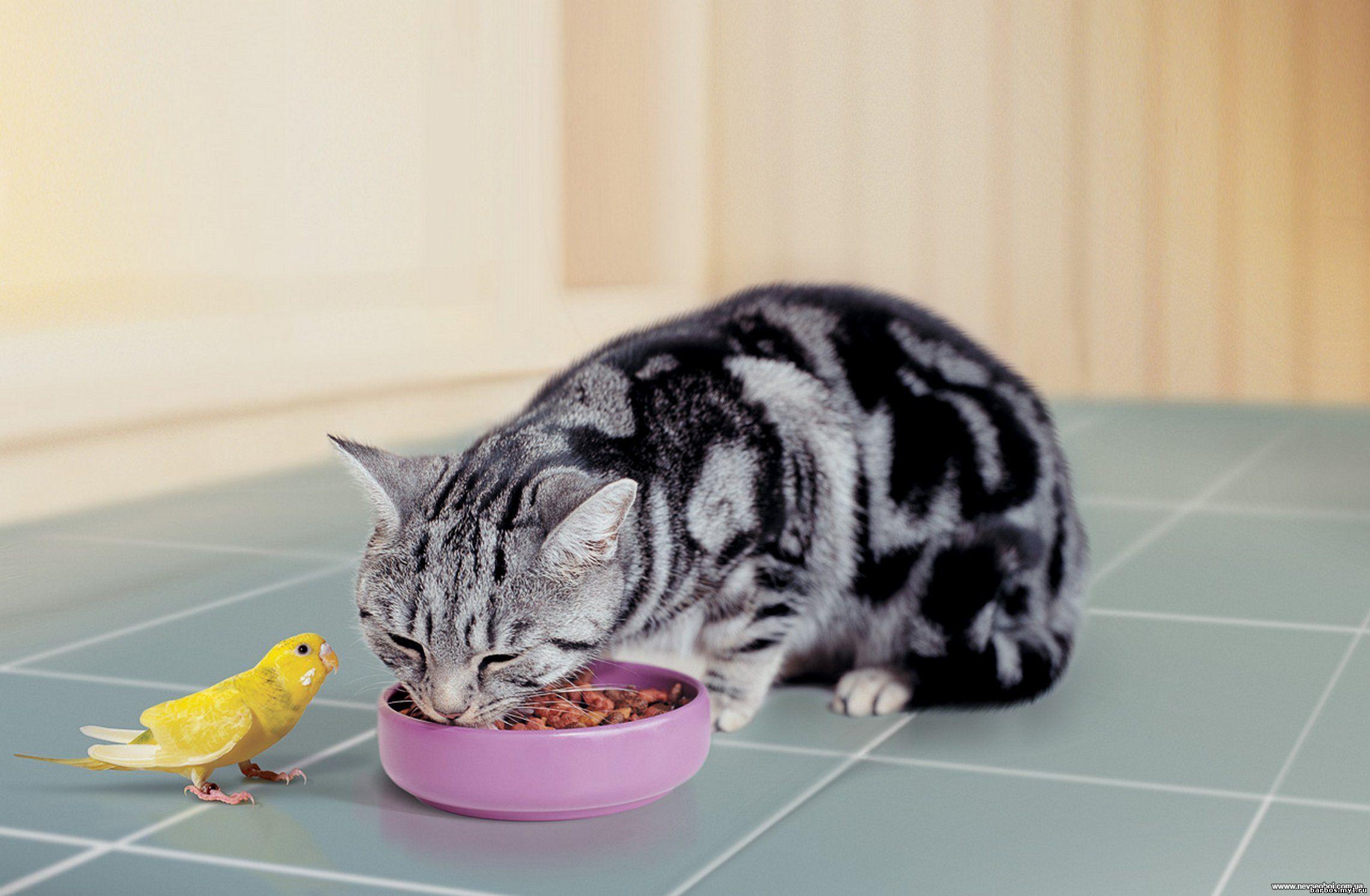 Как сделать чтобы кошка жила дольше