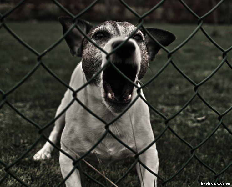 в своре собак жестокие нравы правильно установить